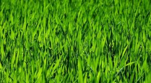 2 300x166 - Reasons to Hire Professional Lawn Mowing Adelaide Service Companies