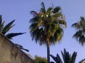 2 - Palm Tree Removal From Your Land - Palm Tree Removal by Inviting an Arborist